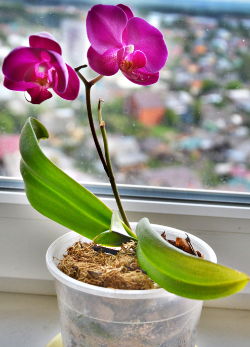 Орхидея. Весенняя акция АвтоСофт